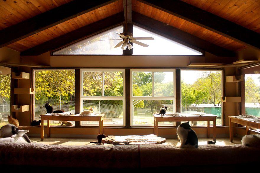 santuario gatti 1