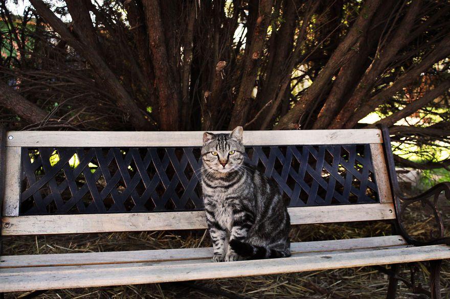 santuario gatti 12
