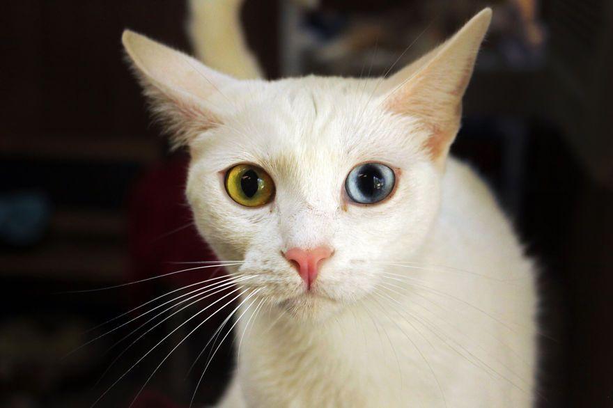santuario gatti 13