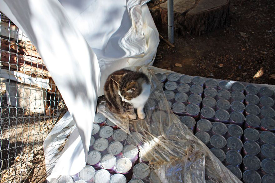 santuario gatti 14