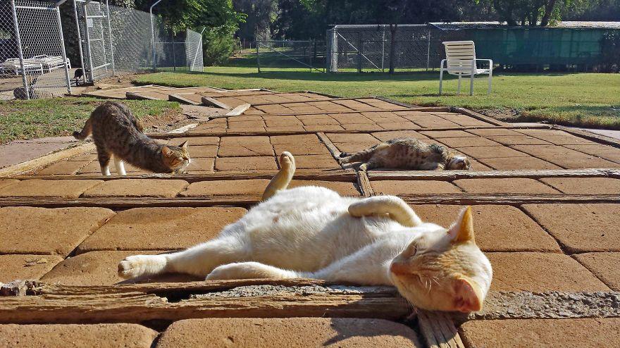 santuario gatti 2