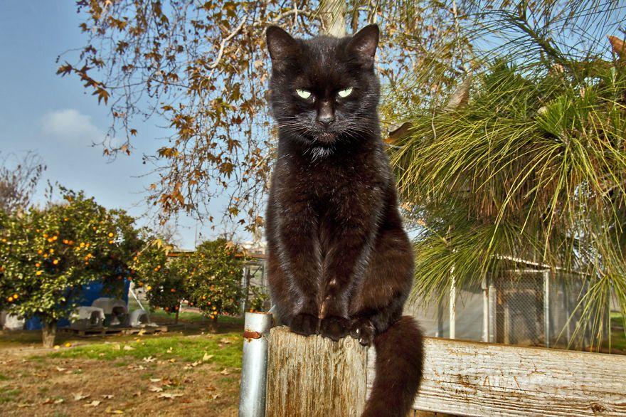santuario gatti 3
