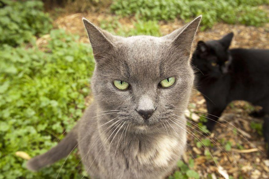 santuario gatti 5