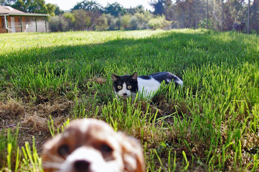 santuario gatti 6