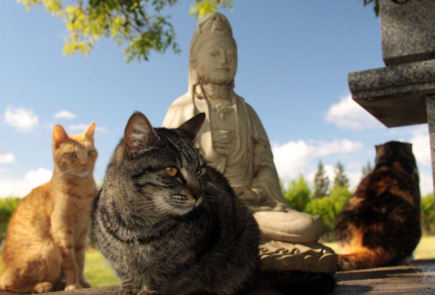 santuario gatti 7