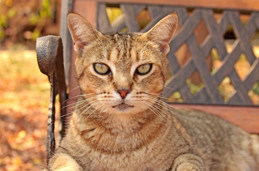 santuario gatti 8