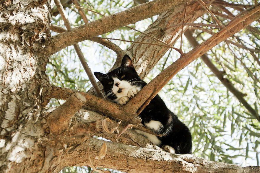 santuario gatti 9