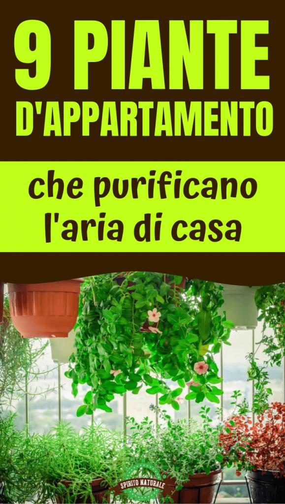 Piante Da Appartamento Che Purificano L Aria.9 Piante Da Appartamento Che Purificano L Aria E Sono Quasi
