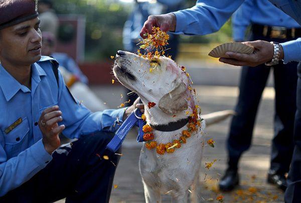 In Nepal c'è una festa dove ogni anno si ringraziano i cani per la loro amicizia e fedeltà. Ecco come.