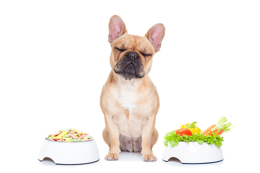 dieta per cani con cancro al fegato