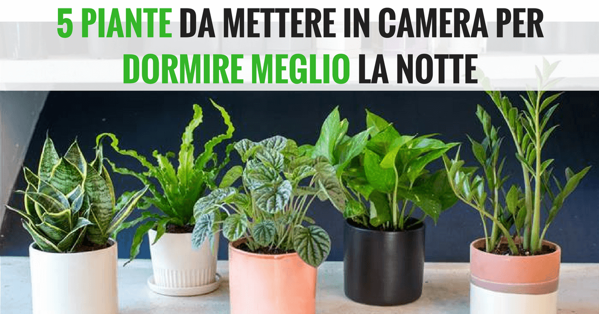 10 piante per dormire meglio: mettile in camera e purifica l ...