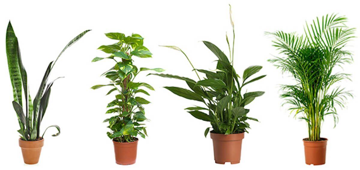 Metti una di queste 5 piante in camera per dormire meglio - Piante che purificano l aria in camera da letto ...